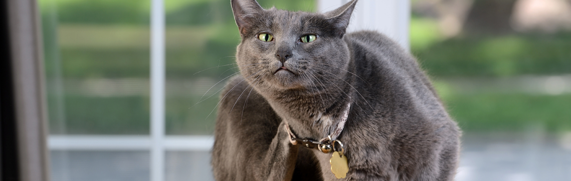 escala picor felino